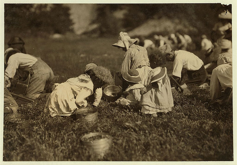 Young pickers on Swifts Bog. All working. Photo courtesy of the Library of Congress.