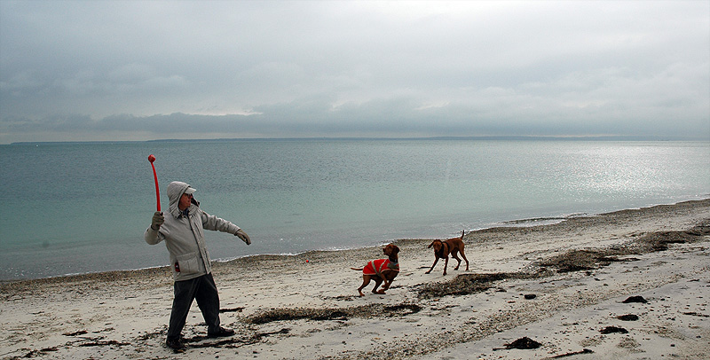 Falmouth's Dog Friendly Beaches