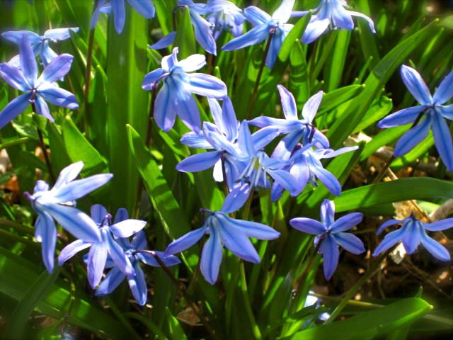 First garden flowers of 2011