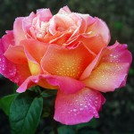 Bed and Breakfast Rose