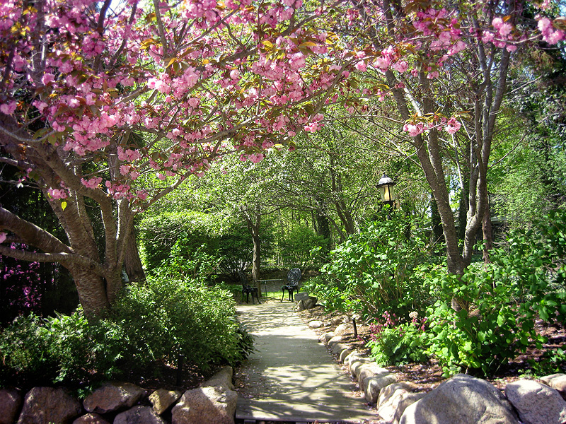 Cherry blossoms at Cape Cod Bed & Breakfast garden entrance.