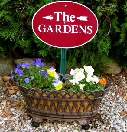 Cape Cod Bed & Breakfast Pansies in the Garden