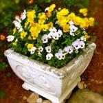 Bed & Breakfast Garden Pansies