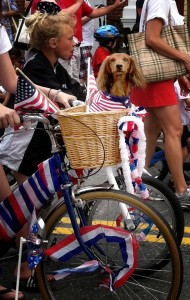 Falmouth's 2011 4th of July parade dog, Cape Cod