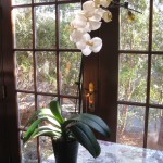 Orchids in the Dining Room