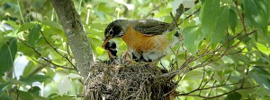 Bird Watching for Beginners @ Cape Cod Museum of Natural History | Brewster | Massachusetts | United States