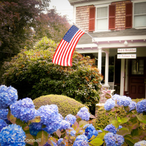 Hydrangea in front of the Palmer House Inn.