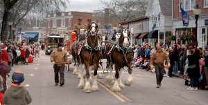 Horses in the Holiday Parade