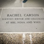 Rachel Carson - Scientist, Writer and Colleague at MBL, NOAA and WHOI.