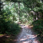 Cape Cod Activities: Beebe Woods Hiking Trail
