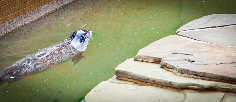 Woods Hole Aquarium Seal Pool