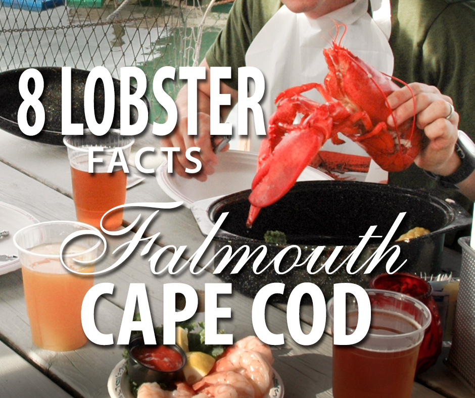 8 New England Lobster Feast