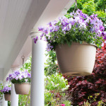 Falmouth Village Blooming: hanging planters on the porch at the Palmer House