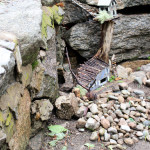 Detail of Rock Wall Fairy House