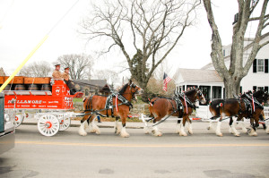 Hallamore Clydesdales