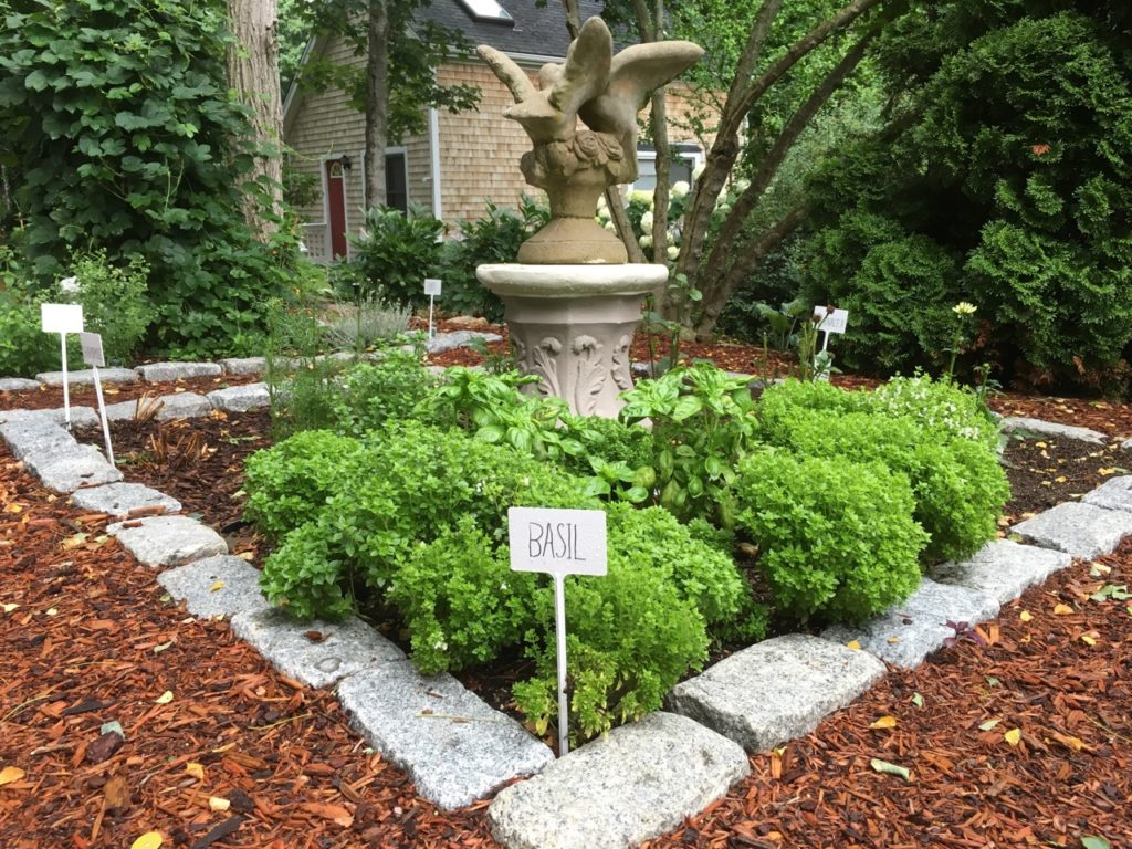 Cape Cod Herb Garden Basil