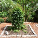 Cape Cod Herb Garden #7