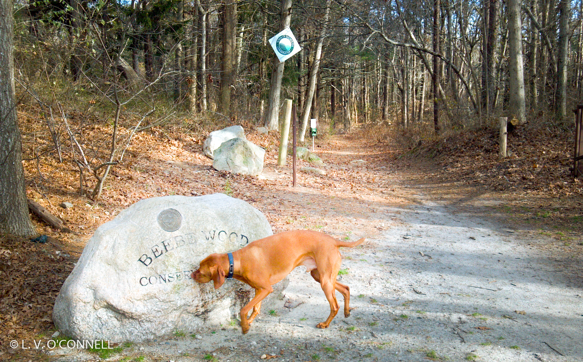Beebe Woods Conservancy nature trails.