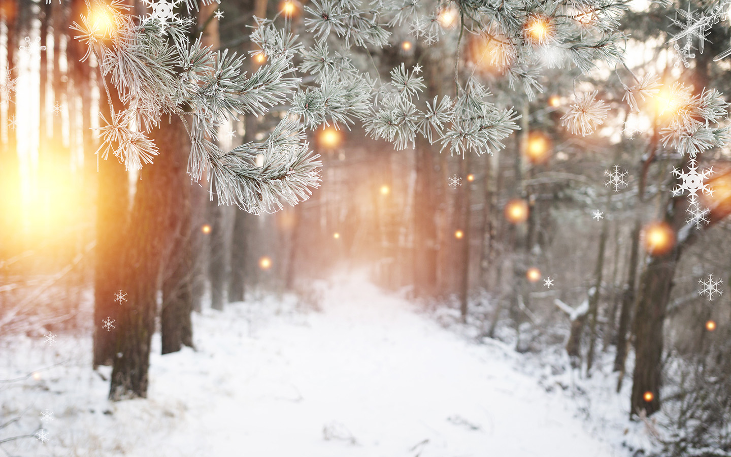 Winter forest with glowing snowflakes