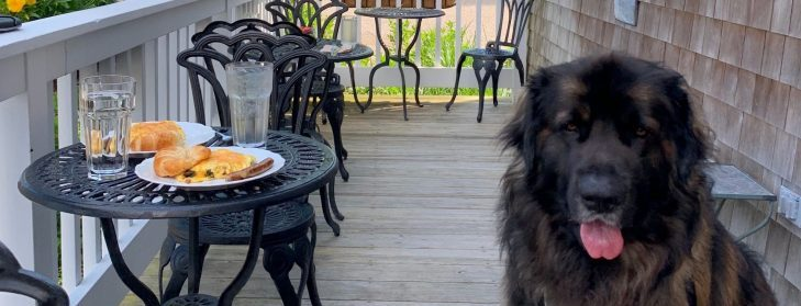 brody, the inn dog, at the outdoor breakfast table