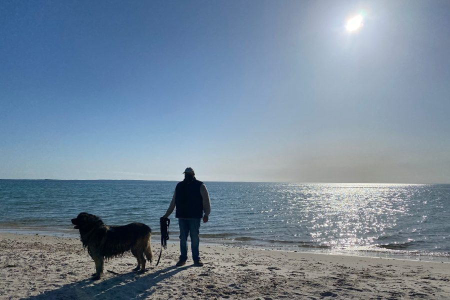 Brody, the inn dog, going for a walk on a beach