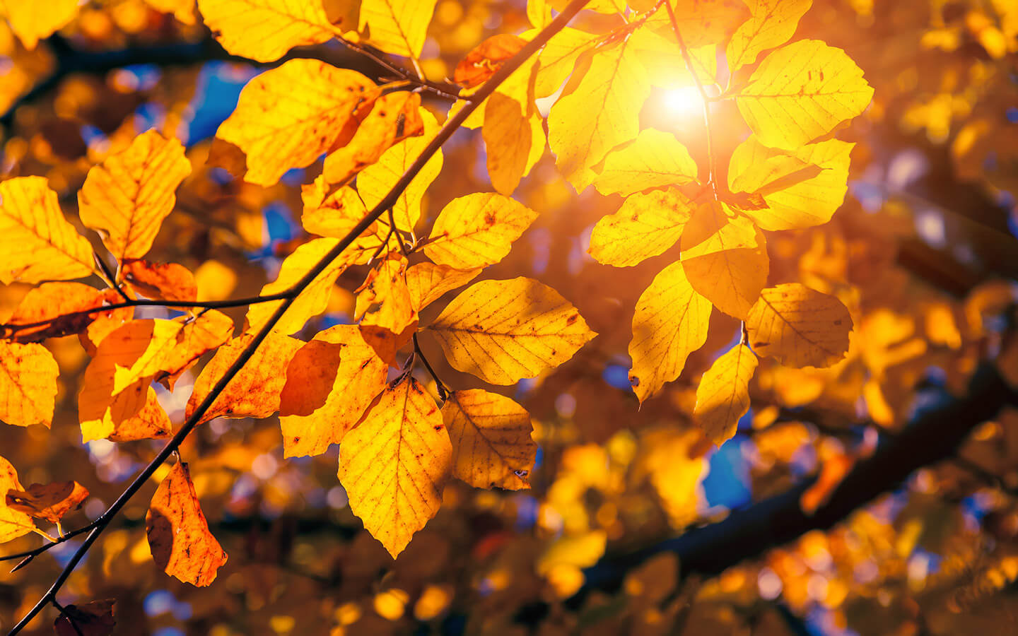Fall leaves in the sunlight